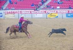 Indische nationale def.rodeo Stock Foto