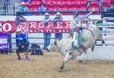 Indische nationale def.rodeo Royalty-vrije Stock Fotografie