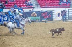 Indische nationale def.rodeo Stock Foto's