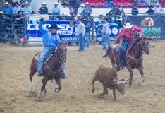 Indische nationale def.rodeo Royalty-vrije Stock Foto's