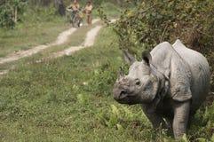Indische Rinoceros Royalty-vrije Stock Afbeeldingen