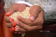 Indische Rituelen van een de Indische Bruidperfoming voor Zijn Huwelijk Royalty-vrije Stock Fotografie