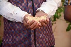 Indische Rituelen van een de Indische Bruidperfoming voor Zijn Huwelijk Royalty-vrije Stock Foto