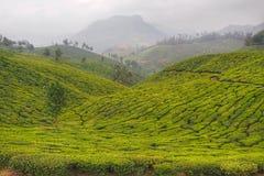 Indische theeaanplantingen in Kerala Stock Foto's