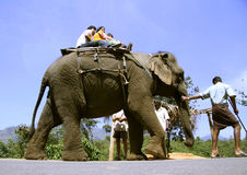 Indische toeristenfamilie die een olifantsrit neemt Stock Foto's