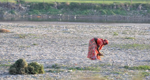 Indische Vrouw die Gras opnemen royalty-vrije stock afbeelding