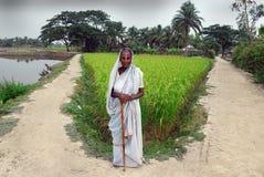 Indische weduwe. Stock Foto's