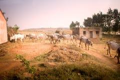 Indischer Bauernhof in der Provinz Andhra Pradesh Lizenzfreie Stockfotografie