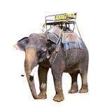 Indischer Elefant mit Bank stockfoto