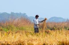 Indischer ländlicher Mann, der auf dem Gebiet arbeitet Lizenzfreie Stockfotografie