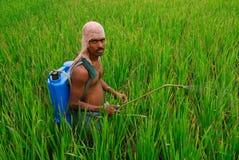 Indischer Landwirt stockfoto