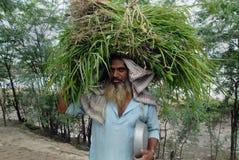 Indischer Landwirt stockfotografie