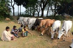 Indischer Landwirt stockbild