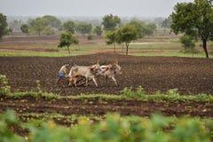 Indischer Landwirt, der den Bauernhof mit Paaren Ochsen pflügt lizenzfreie stockfotos