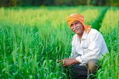 Indischer Landwirt, der Ernteanlage auf seinem Weizengebiet hält lizenzfreies stockfoto