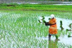Indischer Landwirt, der an Feld arbeitet lizenzfreies stockfoto