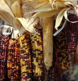 Indischer Mais Lizenzfreies Stockbild