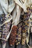 Indischer Mais Stockbilder