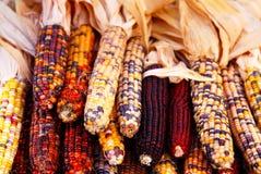 Indischer Mais stockfotos
