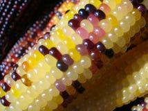 Indischer Mais Stockbild