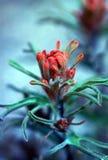 Indischer Malerpinsel Lizenzfreies Stockfoto