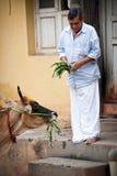 Indischer Mann, der heilige Kuh an der Straße einzieht Indien, Trichy, Tamil Nadu lizenzfreie stockbilder