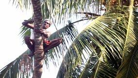 Indischer Mann mit Seilverlegenheiten hackt Palmestamm über Boden stock footage