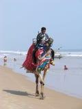 Indischer Mann und Kamel Stockfotografie