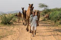 Indischer Mann und Kamel in Pushkar, Indien Stockfotografie