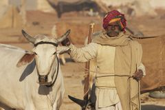 Indischer Mann und sein Prize Ochse Lizenzfreie Stockbilder