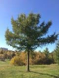 Indischer Sommer Sch?ner Baum im Park lizenzfreie stockfotos
