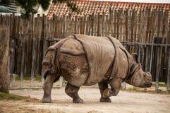 Indisches ein-gehörntes Nashorn Lizenzfreies Stockfoto