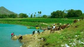 Indisches Frauenreinigungskleid am Fluss, an a-Mann und an den Ziegen im Fluss, stock video