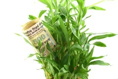 Indisches Geld in den grünen Pflanzenblättern, Konzept des Erhaltens von Dividenden oder von Rückkehr von Ihrem Geld, investieren stockfotografie