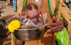 Indisches hindisches sadhu bitten auf der Straße, die einen kleinen Affen in der Stahlschüssel trägt Lizenzfreies Stockfoto