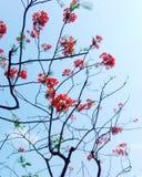 Indisk blomma arkivbild