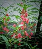 Indisk blomma royaltyfri foto