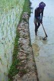 Indisk bonde Fotografering för Bildbyråer