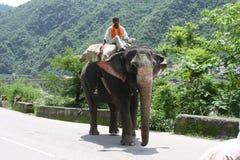 Indisk elefant Royaltyfri Bild