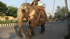Indisk elefant Arkivfoto
