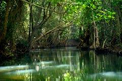 Indisk flod Arkivfoton