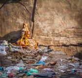 Indisk guld- apa - Agra, Indien Arkivbild