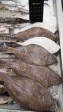 Indisk hälleflundra på is i supermarket Arkivbilder