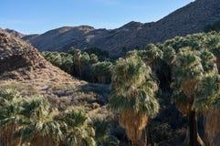 Indisk kanjon, Palm Spring, Kalifornien royaltyfria foton