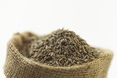 Indisk krydda-spiskummin royaltyfri fotografi
