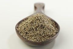 Indisk krydda-spiskummin royaltyfria bilder