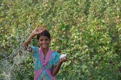 Indisk kvinna som plockar att vinka för bomull Royaltyfri Foto