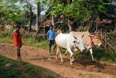 indisk livsstil Arkivbild
