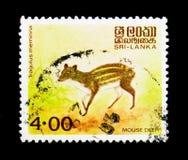 Indisk meminna för Tragulus för mushjortar, infödd djurserie, circa 1981 Arkivfoton