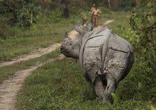 indisk noshörning Arkivfoton